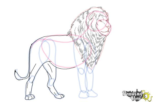 How to Draw a Lion Step by Step - Step 9