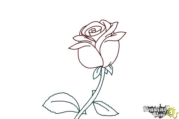 how to draw an open rose step by step