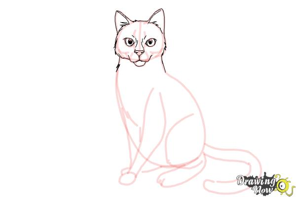 How to Draw Hawkfrost from Warrior Cats - Step 12