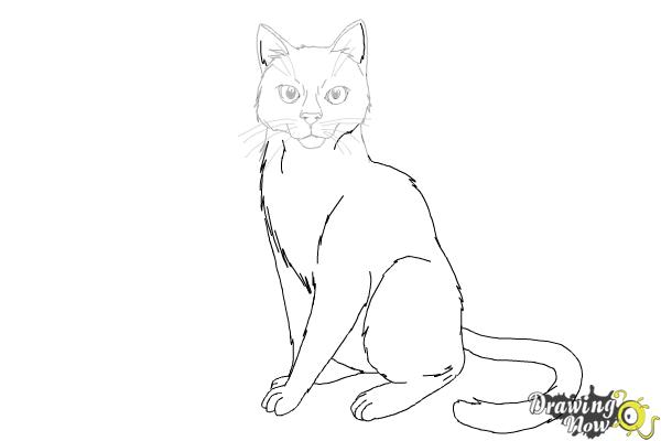 How to Draw Hawkfrost from Warrior Cats - Step 13