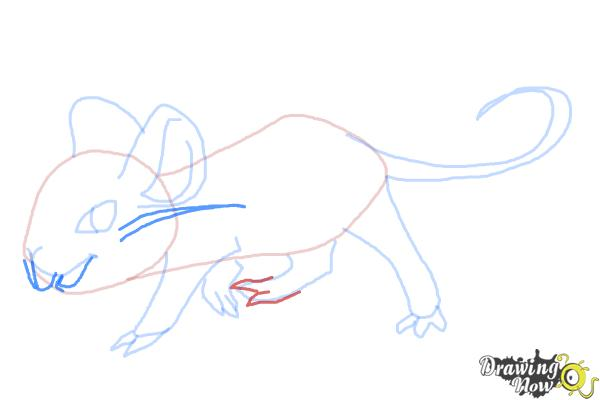how to draw a rat step by step