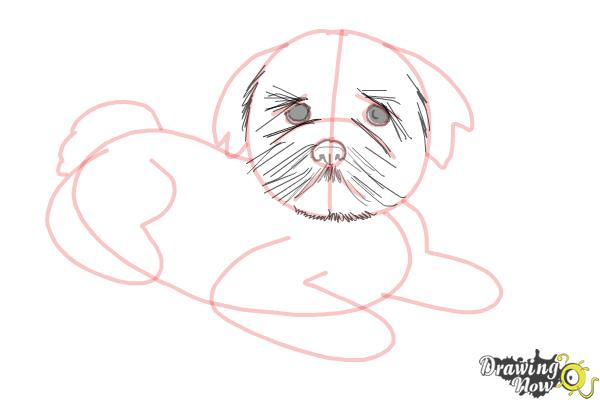 How to Draw a Furry Dog - Step 7