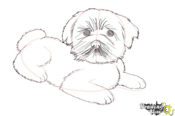 How to Draw a Furry Dog - Step 9