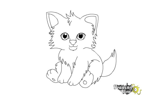 How to Draw a Baby Wolf - Step 9