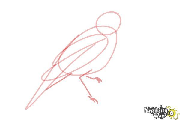 How to Draw a Nightingale Bird - Step 5