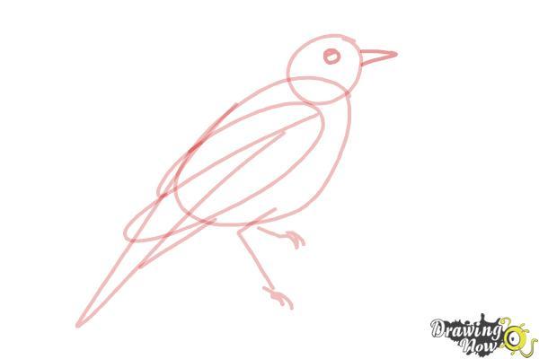 How to Draw a Nightingale Bird - Step 6