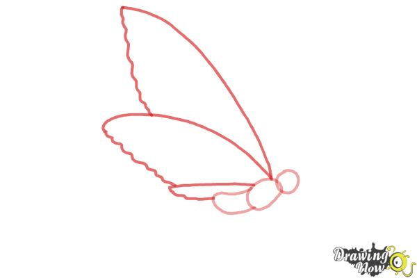 How to Draw a Butterfly Step by Step - Step 2