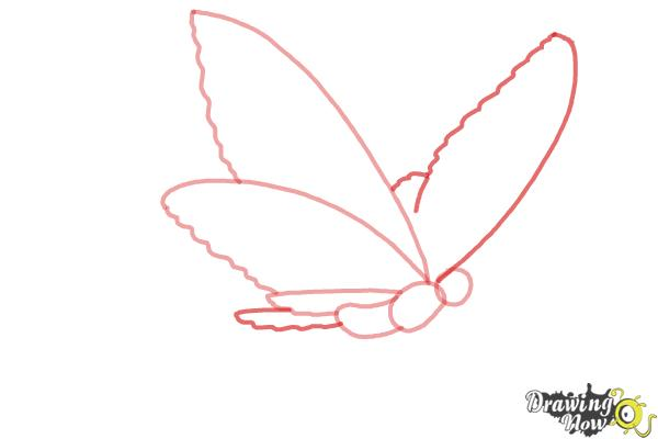 How to Draw a Butterfly Step by Step - Step 3