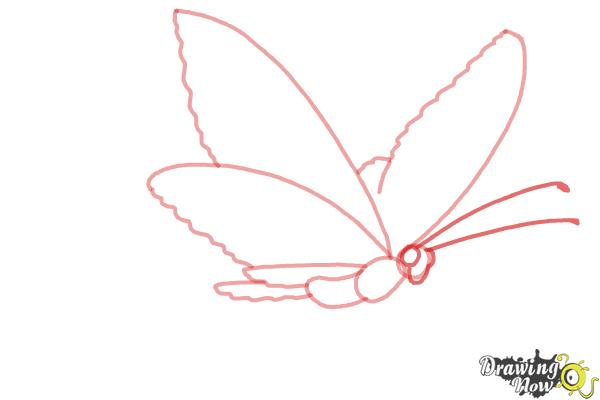 How to Draw a Butterfly Step by Step - Step 4