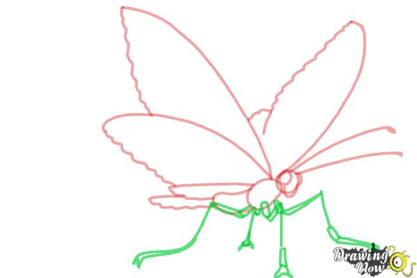 How to Draw a Butterfly Step by Step - Step 5