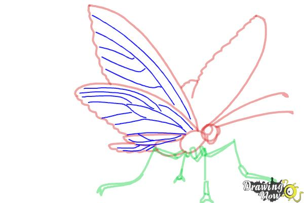 How to Draw a Butterfly Step by Step - Step 6