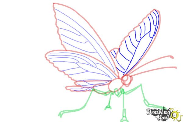 How to Draw a Butterfly Step by Step - Step 7