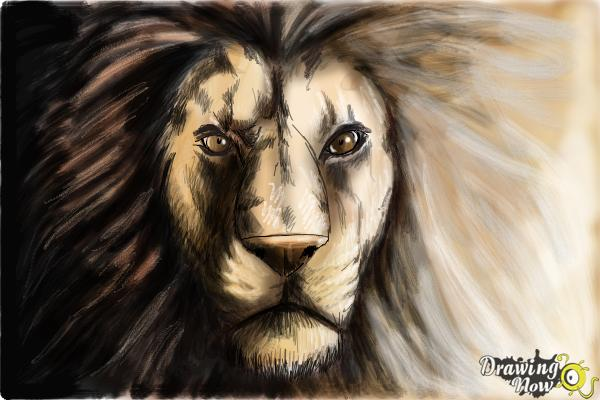 How To Draw A Lion Face Drawingnow