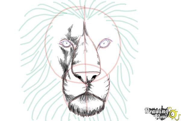 How to draw a lion face step 8