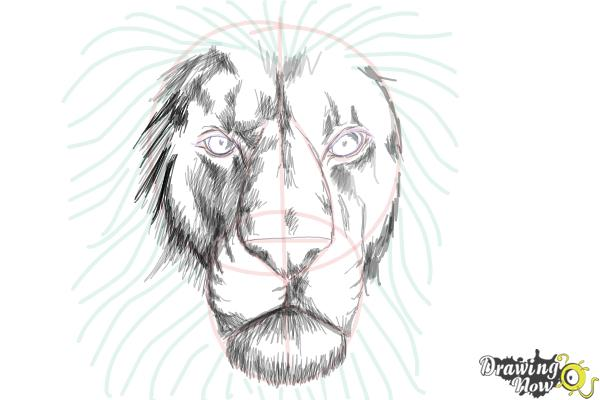 How to draw a lion face step 9