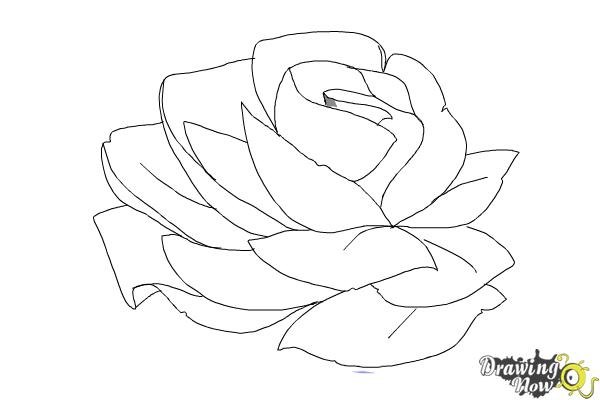 How to Draw a Rose In Pencil - Step 7