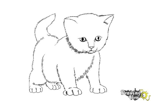 how to draw a kitten step by step step 10