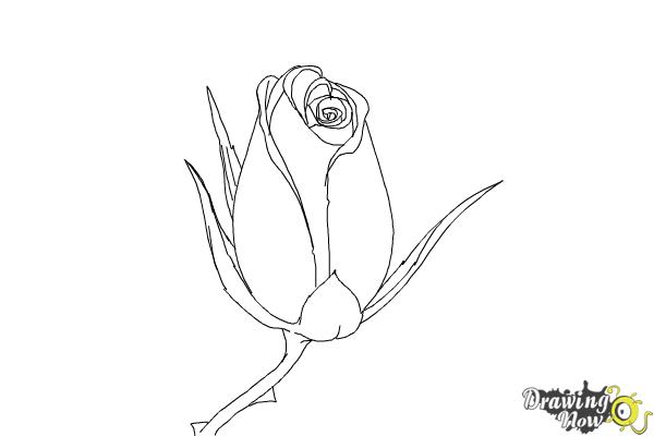 How to Draw a Rose Bud - Step 8