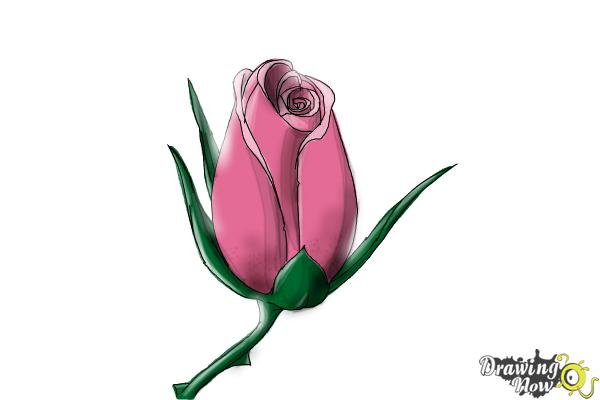 How to Draw a Rose Bud - Step 9