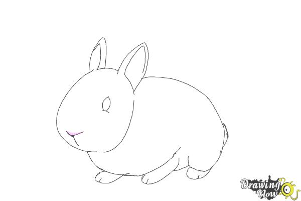 How to Draw a Bunny Step by Step - Step 7