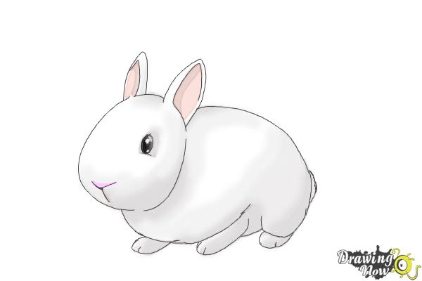 How to Draw a Bunny Step by Step - Step 8