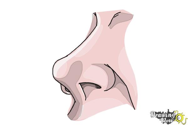 How to Draw a Nose Easy - Step 7