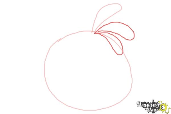 How to Draw Angry Bird Stella, Pink Bird - Step 3
