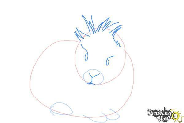 How to Draw a Lionhead Bunny - Step 4