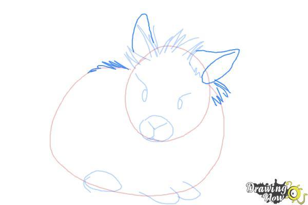 How to Draw a Lionhead Bunny - Step 5
