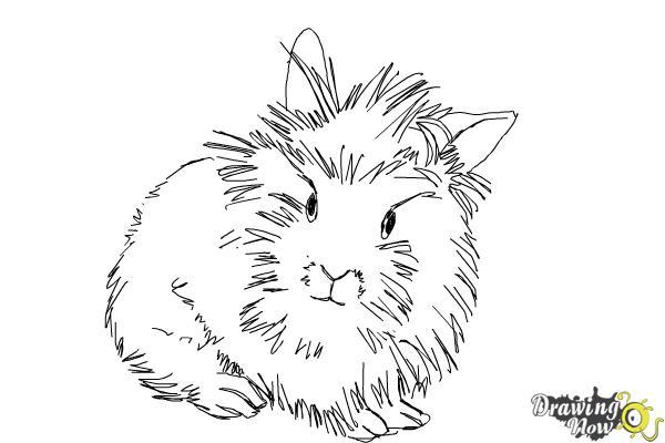 How to Draw a Lionhead Bunny - Step 7