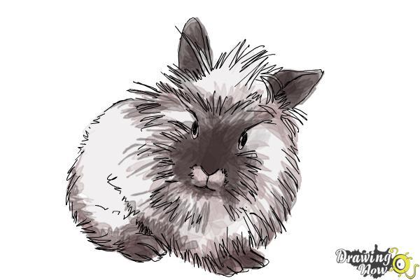 how to draw a lionhead bunny drawingnow