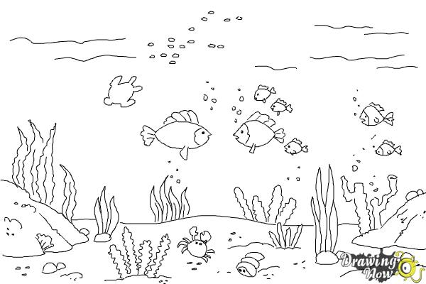 How to Draw an Underwater Scenehow to Draw an Underwater Scene - Step 9