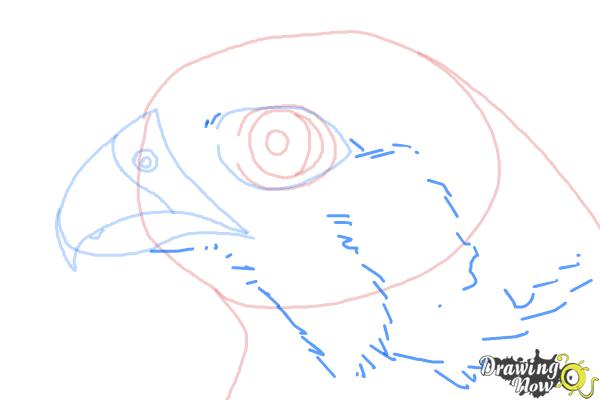 How to Draw a Falcon Head - Step 6