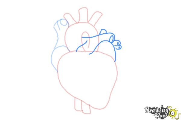 How to Draw a Real Heart - Step 5