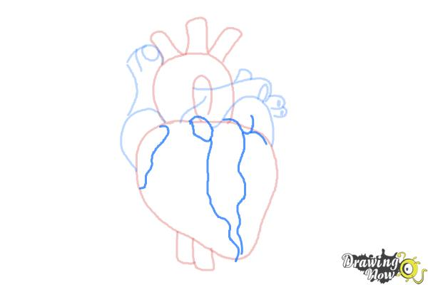 How to Draw a Real Heart - Step 6