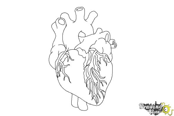 How to draw a real heart step 8