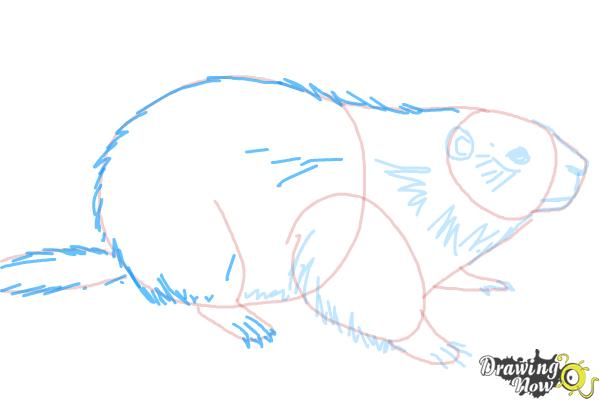 How to Draw a Groundhog - Step 7