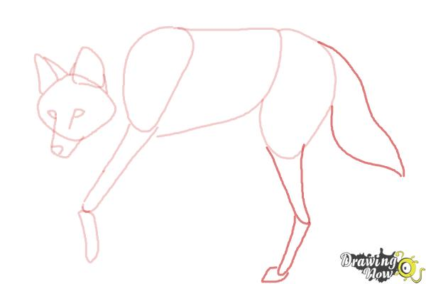 How to Draw a Wolf - Maned Wolf - Step 6
