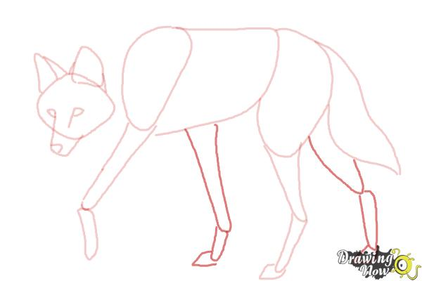 How to Draw a Wolf - Maned Wolf - Step 7