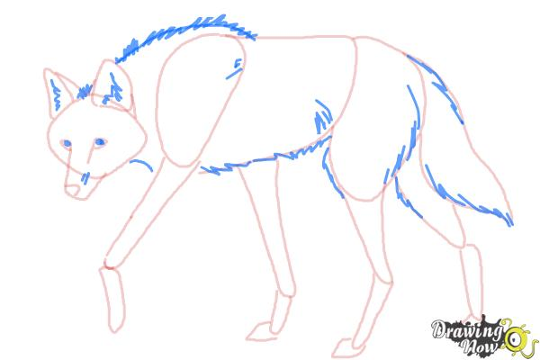 How to Draw a Wolf - Maned Wolf - Step 8