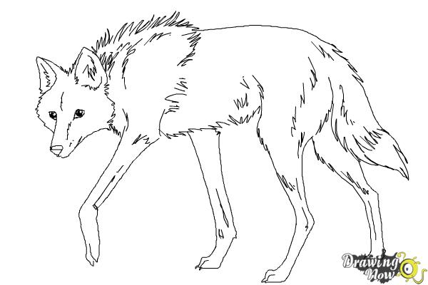 How to Draw a Wolf - Maned Wolf - Step 9