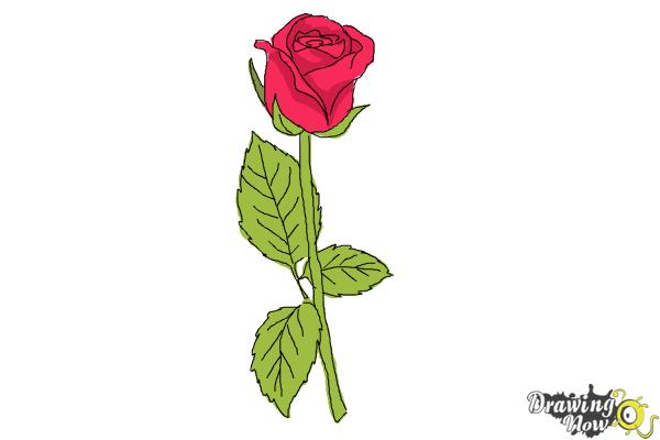 How to draw a rose step by step for beginners step 10