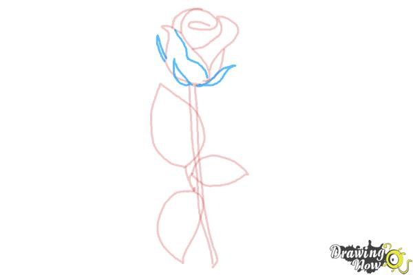 How to Draw a Rose Step by Step for Beginners - Step 6