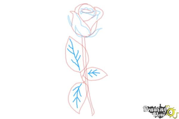 How to Draw a Rose Step by Step for Beginners - Step 8