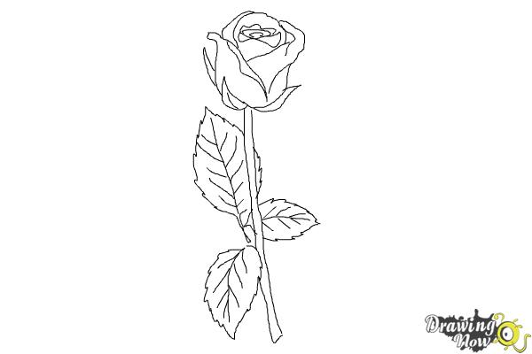 How to draw a rose step by step for beginners drawingnow for How to draw a hard flower