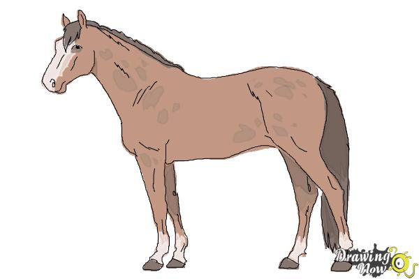 How to Draw a Realistic Horse - Step 10