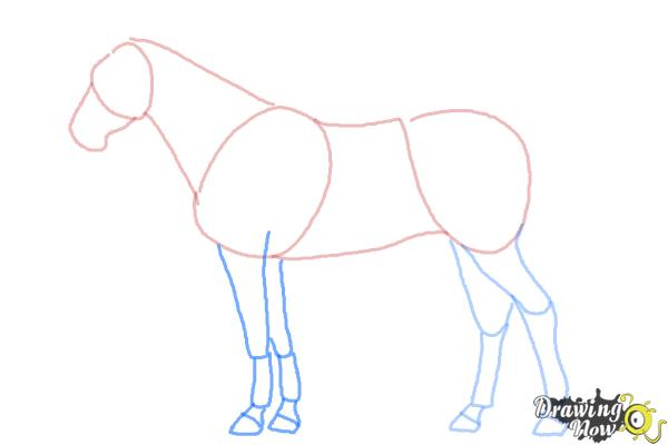 How to Draw a Realistic Horse - Step 6