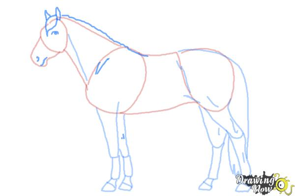 How to Draw a Realistic Horse - Step 8