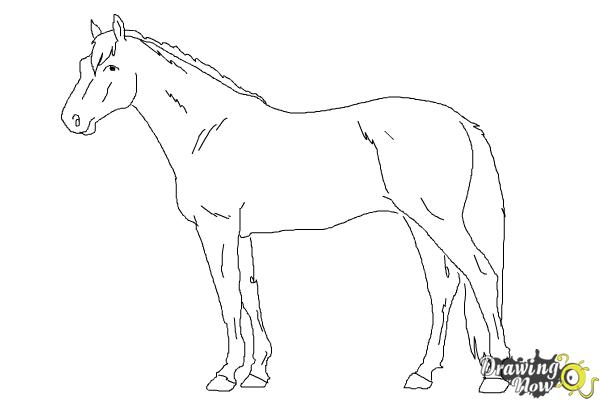 How to draw a realistic horse step 9