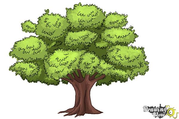 Step 10 color your drawing notice that i used a clear green in the center of the branches and darker green between them